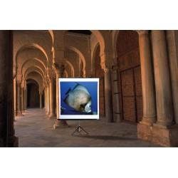 reflecta Tripod screen TwinLux 125x125 cm